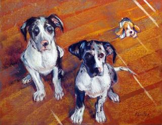 Harlequin Pups